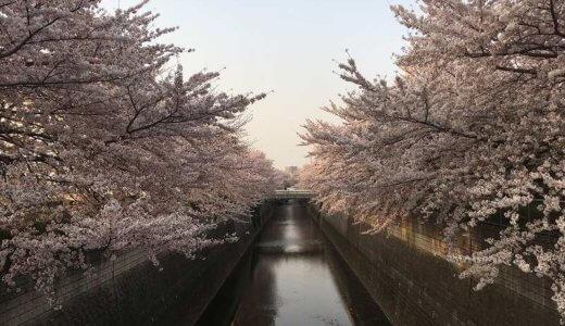 【2019年桜】都内桜スポットを巡ってたら悟りを開いてしまった話